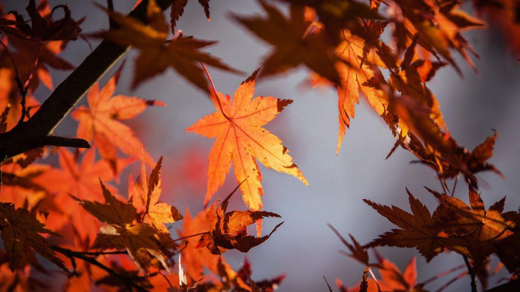 201709_ikb_autumn